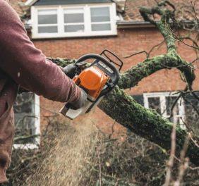 Pro Tree Service of ...